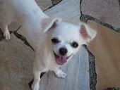 Mila minha cachorrinha