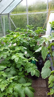 6 different varieties of potato in containers