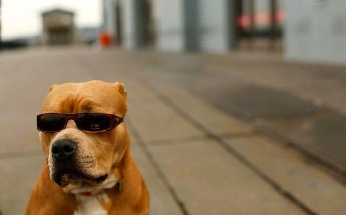 Cute dogs, funny dog picture, best dog photos