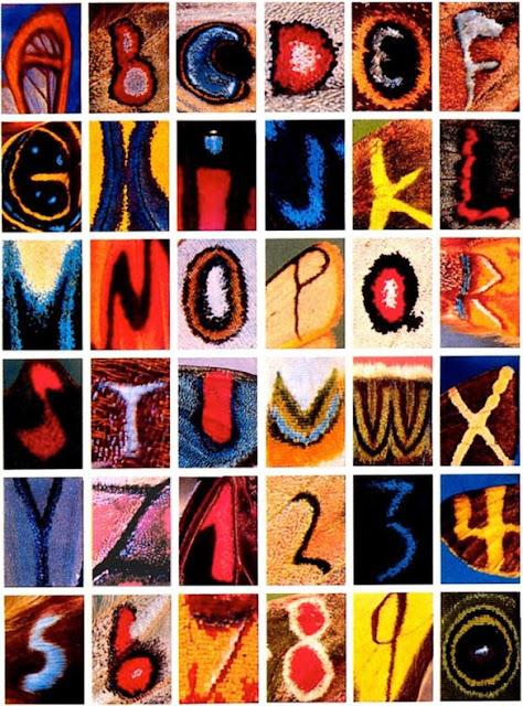 alfabeto patrones alas mariposas