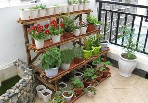 rak tanaman halaman rumah