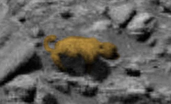 دب يسير على سطح المريخ