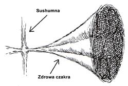 czakra i shusumna, zdrowa czakra