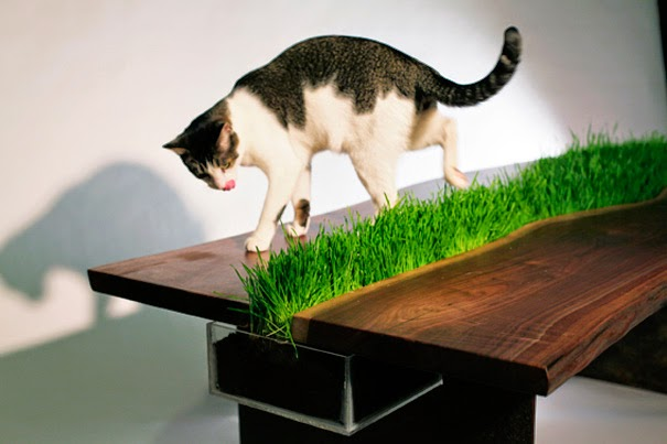innovative furniture ideas for animals7