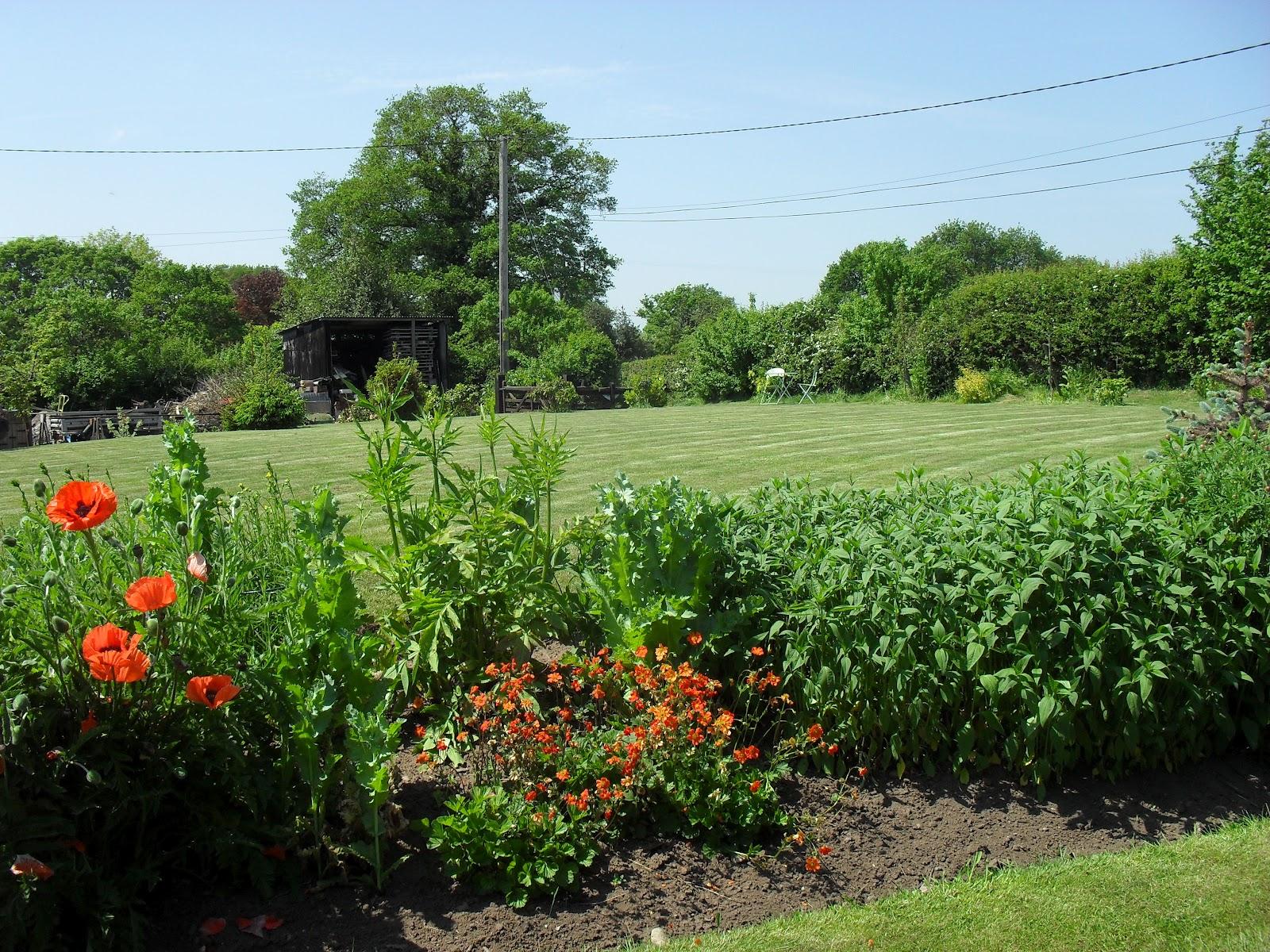 Garden grove borders : Holly grove garden june