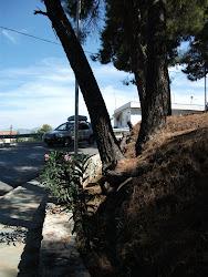 SOS!!! ΛΟΦΟΣ ΑΜΦΙΟΥ ΣΤΗ ΘΗΒΑ 28-3-2011