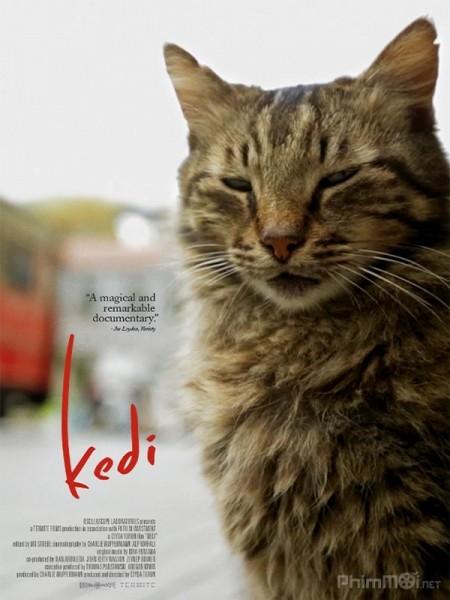 Thế Giới Loài Mèo - Kedi (2017)