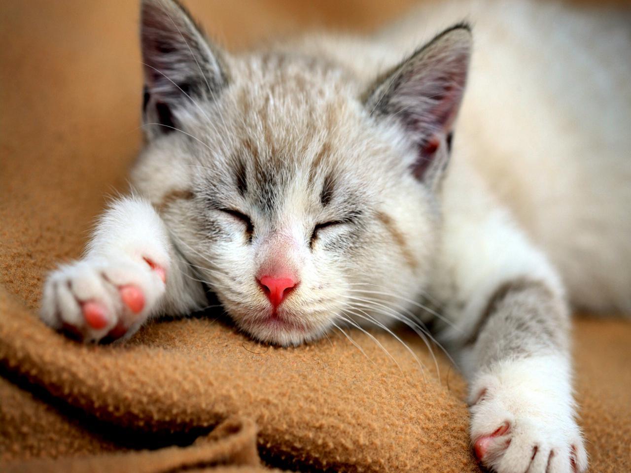 Androidcats игры с котами, кошками, котятами, мой том на андроид.