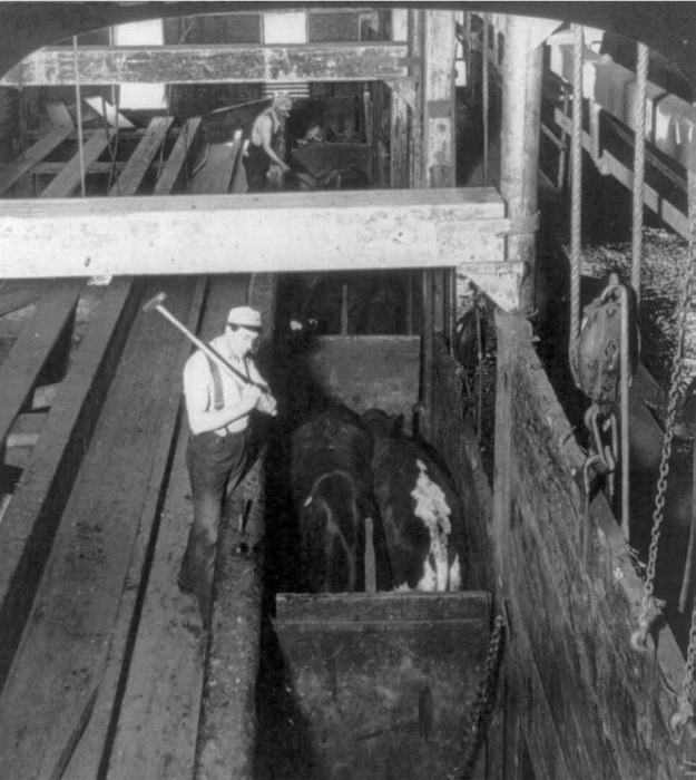 an analysis of chicago meat packing industry Chicago 1900: pickled hands and much worse the nightmare of the chicago meatpacking industry was it was the meatpacking industry itself which pursued.