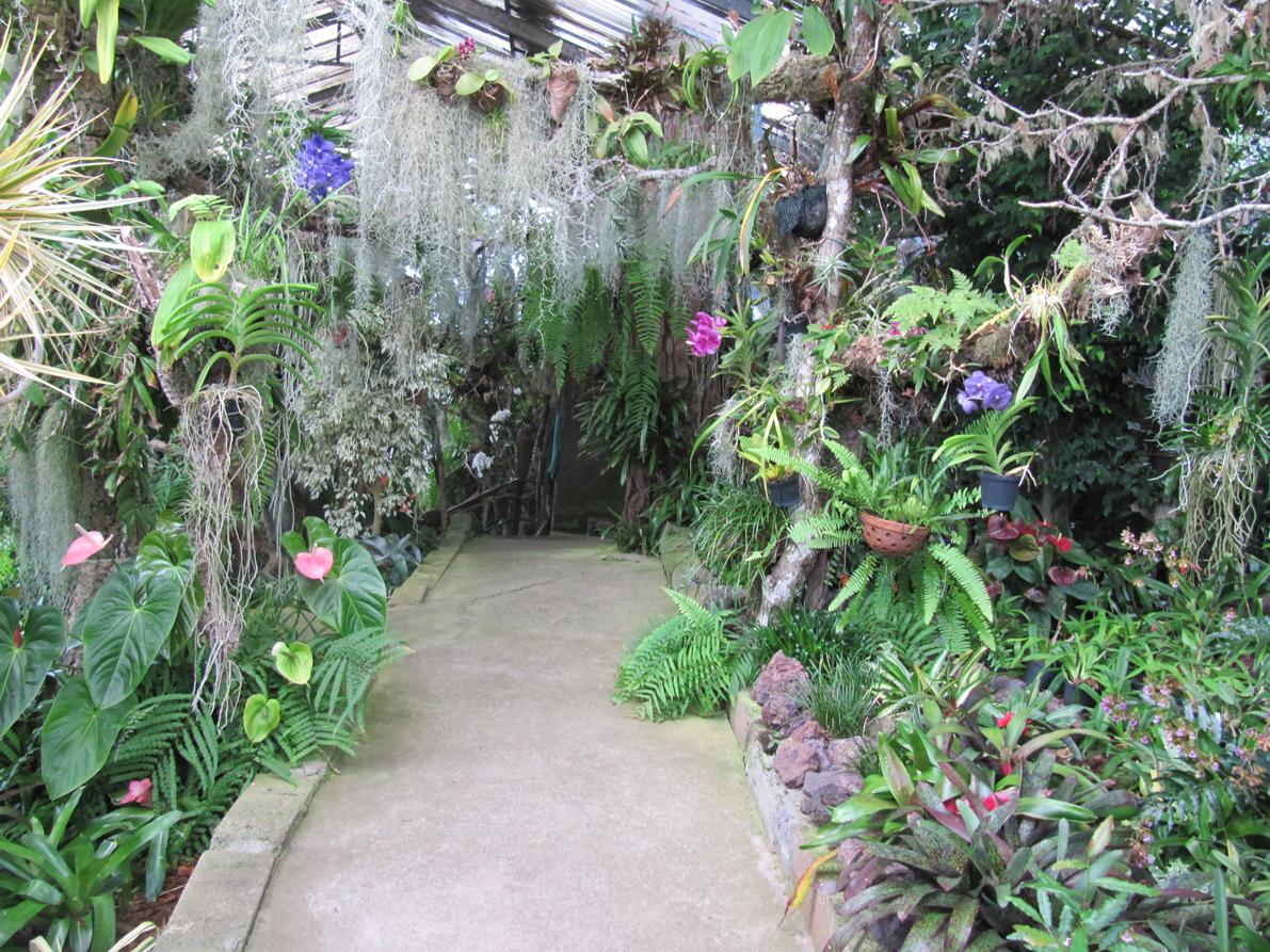 paradis express: Le jardin des orchidées, Funchal, Madère.