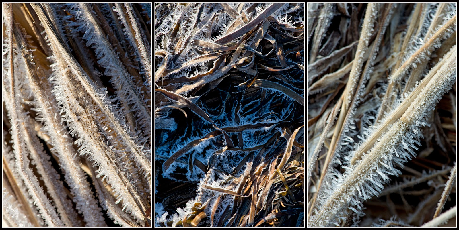 Nova Scotia; Cananda: Indian Path; Ice, Crystals; Grasses