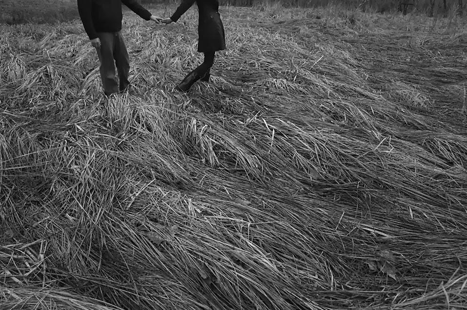 winter grass st louis mo