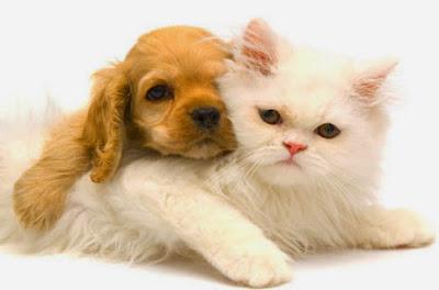 Θεραπεία με βότανα για τα κατοικίδια ζώα