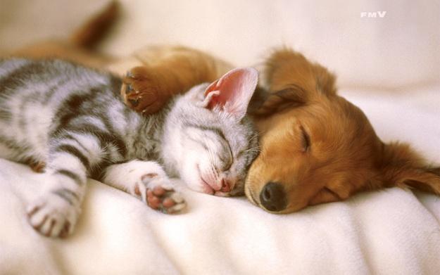 Симпатичные котята и щенки фото