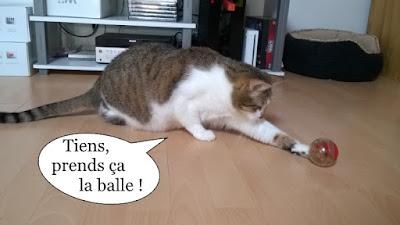 Chat qui chasse des croquettes.