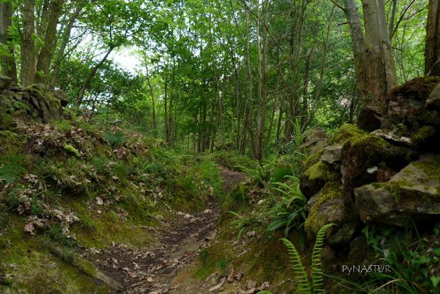 Ruta Cascadas del Guanga Asturias