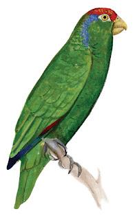 Guía de Aves de Coahuila