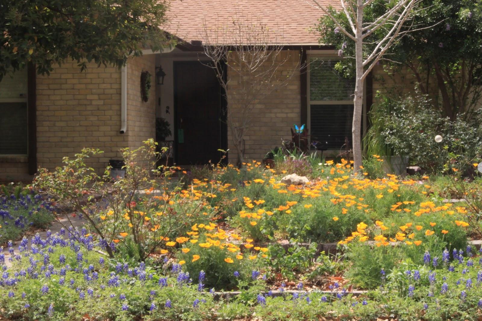 Rock-Oak-Deer: Scene on the street: Bluebonnets and poppies in ...