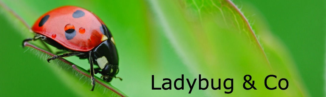 Ladybug & Co