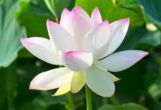 成為禪宗弟子,找到了我生生世世尋覓已久的心靈依歸,開始了我的禪修生涯。