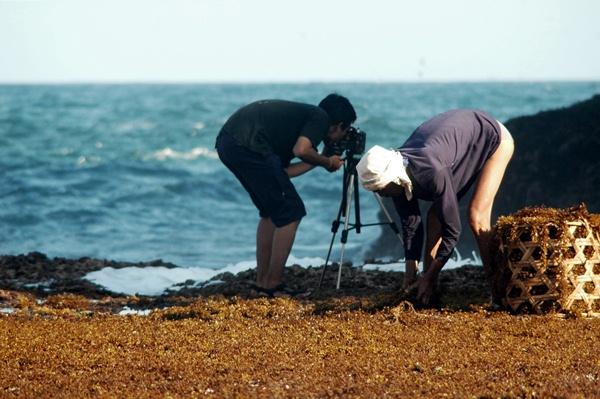 Sedahan Rumput Laut