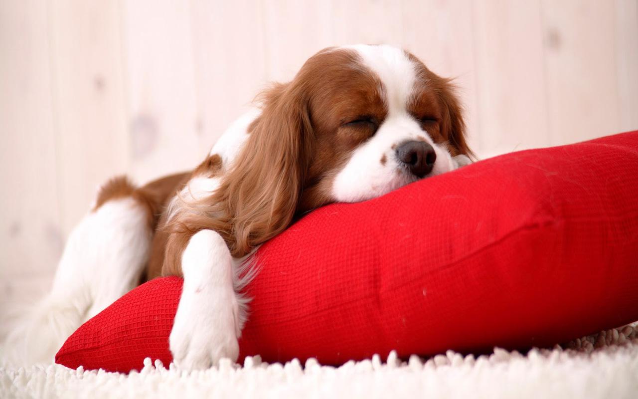http://2.bp.blogspot.com/-LLzZNoNDMsg/UMqd0Ls554I/AAAAAAAABys/mlWF_jZ4Q3s/s1600/dogs-christmas-pets-HD-Wallpapers+02.jpg