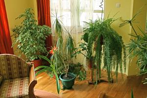 Progetto natura cura delle piante in casa for Concime per gerani fatto in casa
