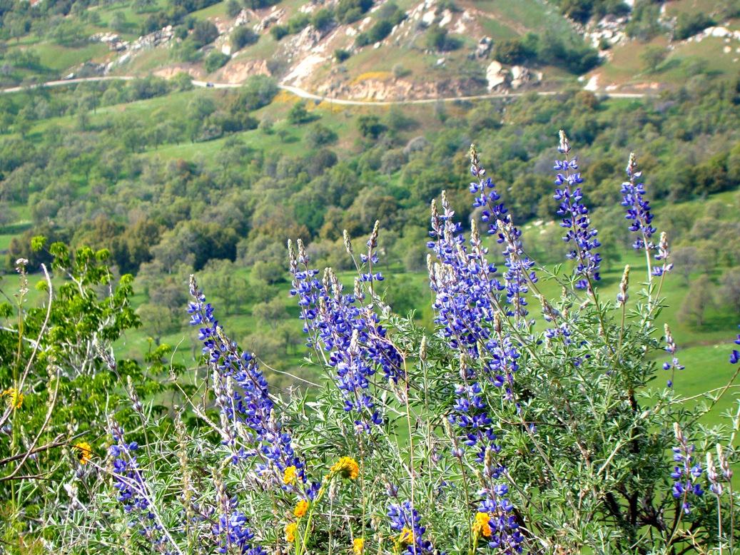Geotripper spring arrives in the sierra nevada foothills for Sierra valley