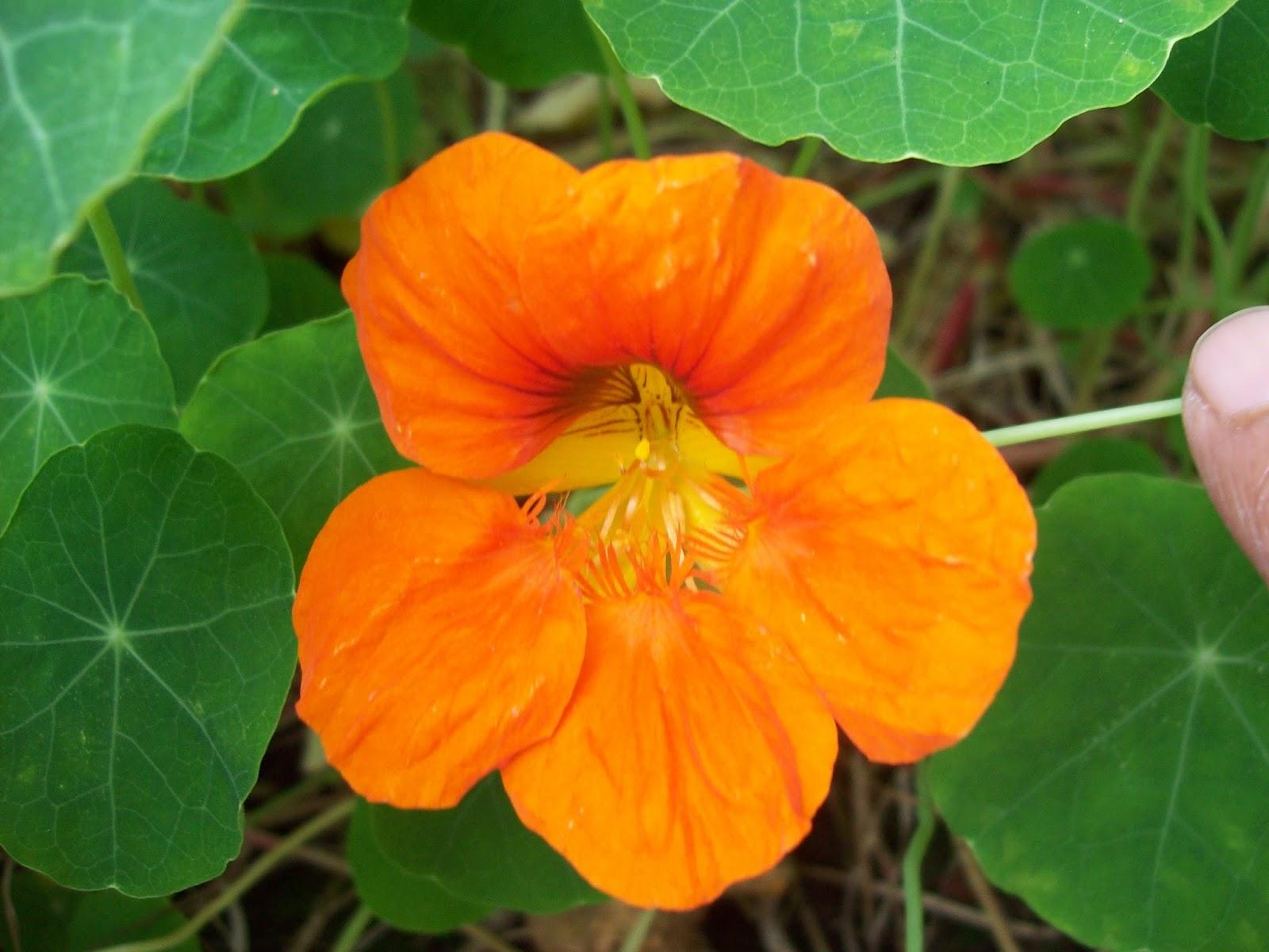 Gardentropics Our World Munnar Flowers