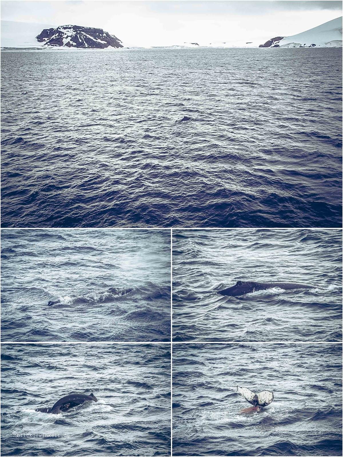 Walbilder mit rotem Krill