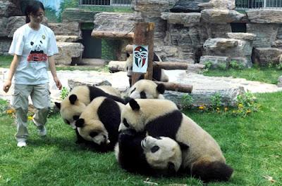 Zoo de Beijing - que visitar