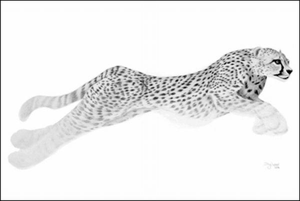 صور لوحات فنية روعه جنان مرسومة رسم بالفم بقلم الرصاص ولا اروع 87442.jpg