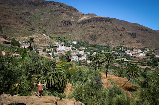 Temisas in Gran Canaria with olive and palm trees