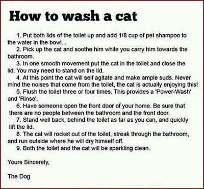 how_to_wash_a_cat