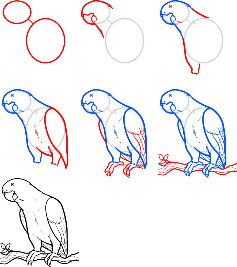 Drawing Art How To Draw Birds