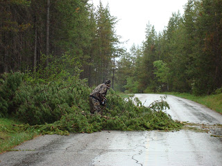 cutting fallen tree