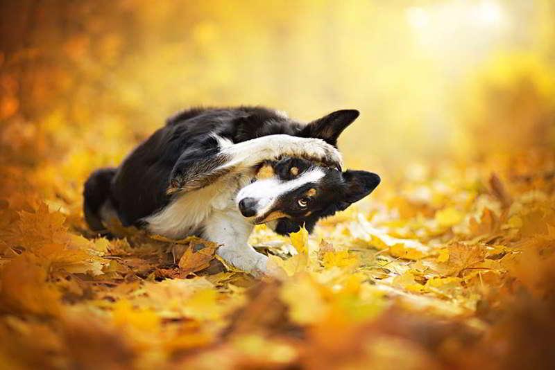 dog-photography-alicja-zmyslowska-05