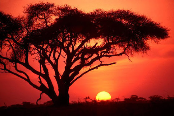 O maravilhoso pôr do sol africano