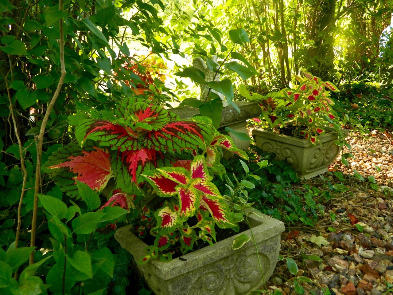 Pam 39 S English Cottage Garden Container Gardening