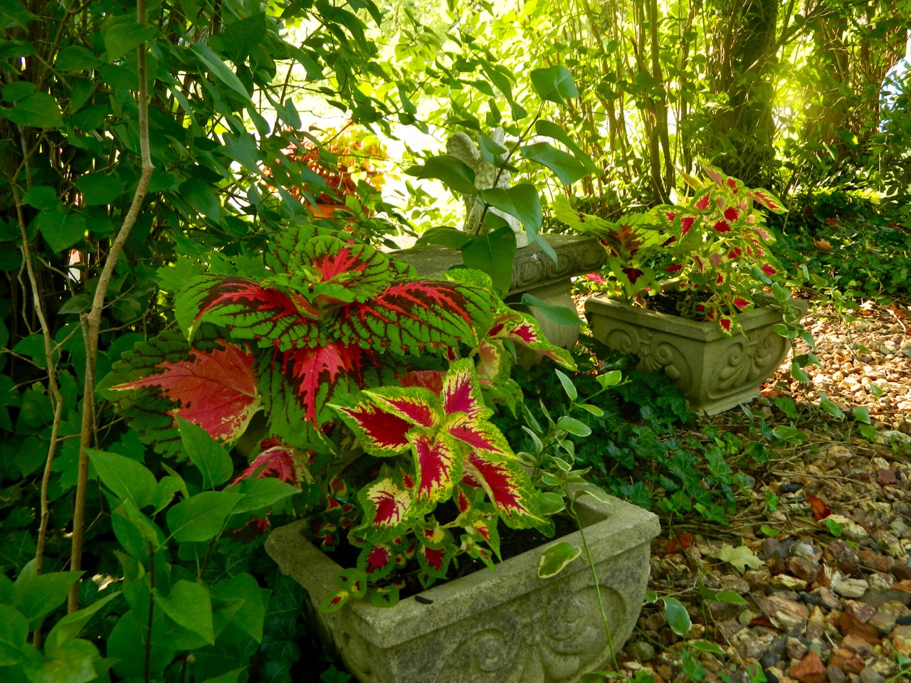 Pam 39 s english cottage garden container gardening for Perennial container garden designs