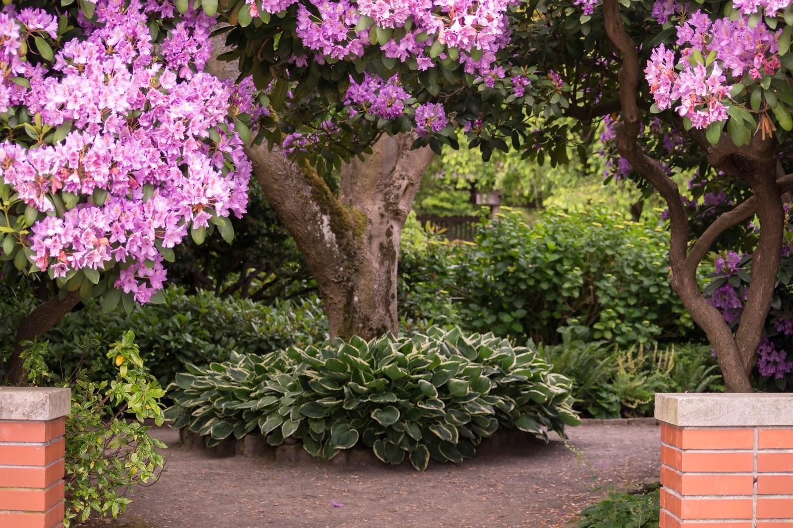 В глубине района спрятан небольшой но симпатичный парк - сады Парсон.