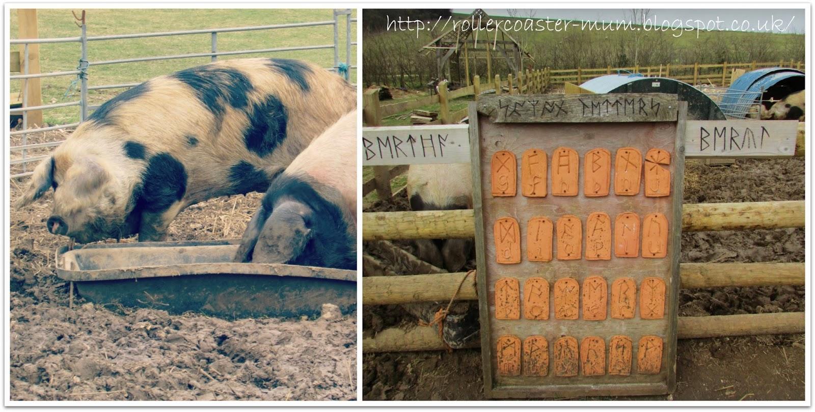 Celtic pig names, hairy pigs, Butser Ancient Farm