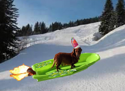 Reuben the dachshund on a rocket-powered sled