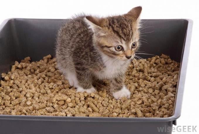 Inilah Mengapa Kucing Mengubur Kotorannya