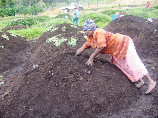 http://2.bp.blogspot.com/-LOEQKwH9oMo/T136gpfdOxI/AAAAAAAALWs/_OfHzan3y2Y/s640/Planting+vines.jpg