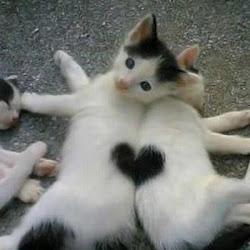 la composizione dell'amore...