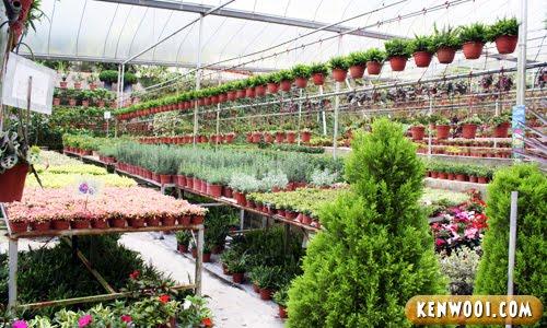 cameron flower nursery