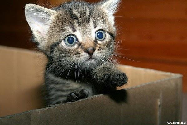 Photo chat dans la boite