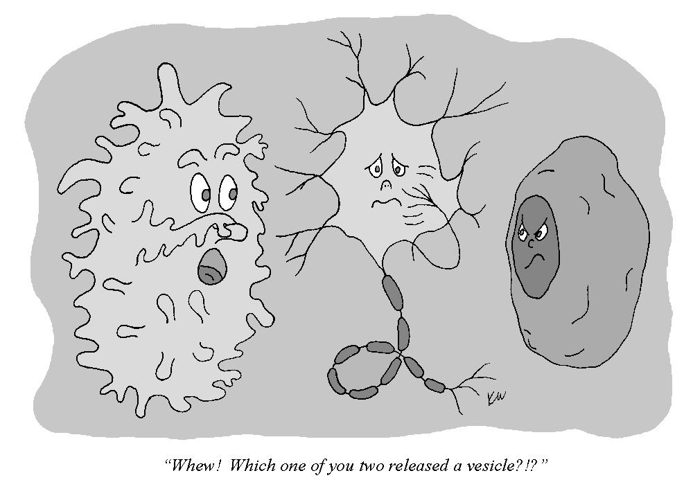 Macrophage Cartoon - Cliparts.co