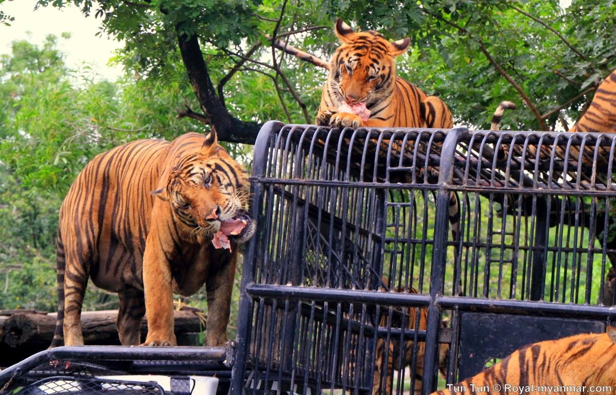 Tun Tuns Photo Diary: Safari World, Bangkok #1